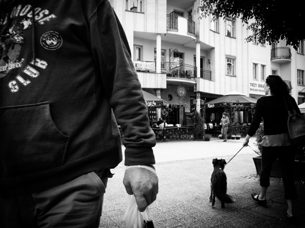 Pies; Dog; Ulica street; Sopot; Ręka; Hand