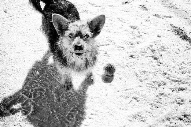 pies; dog; Debrzyno