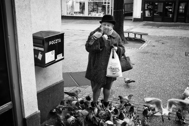 gołąb; pigeon; sopot; poczta; postal