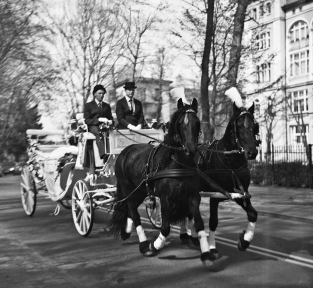 konie; horses; sopot