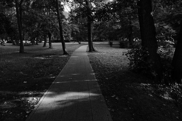Gdańsk, Jelitkowo, drzewa, trees, światło, light