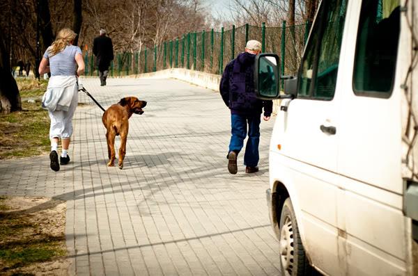 jelitkowo; pies; dog