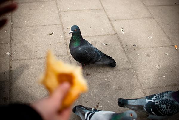 gołab, pigeon, ręka, hand, bułka, loaf,