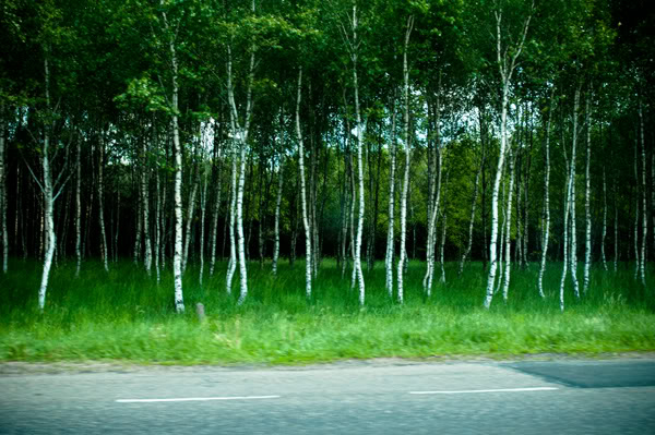 2011; brzozy; droga; drzewa; las; maj; poruszone; samochód;