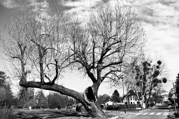 drzewo, tree, nieby, sky, ulica, street