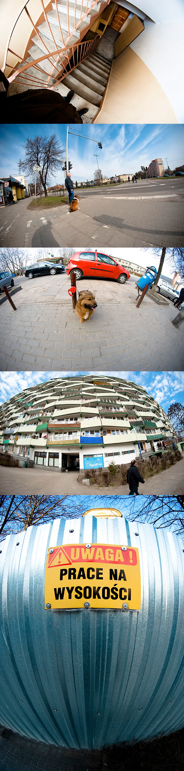 fisheye, rybie oko, ulica, street, pies, dog, plot, fence