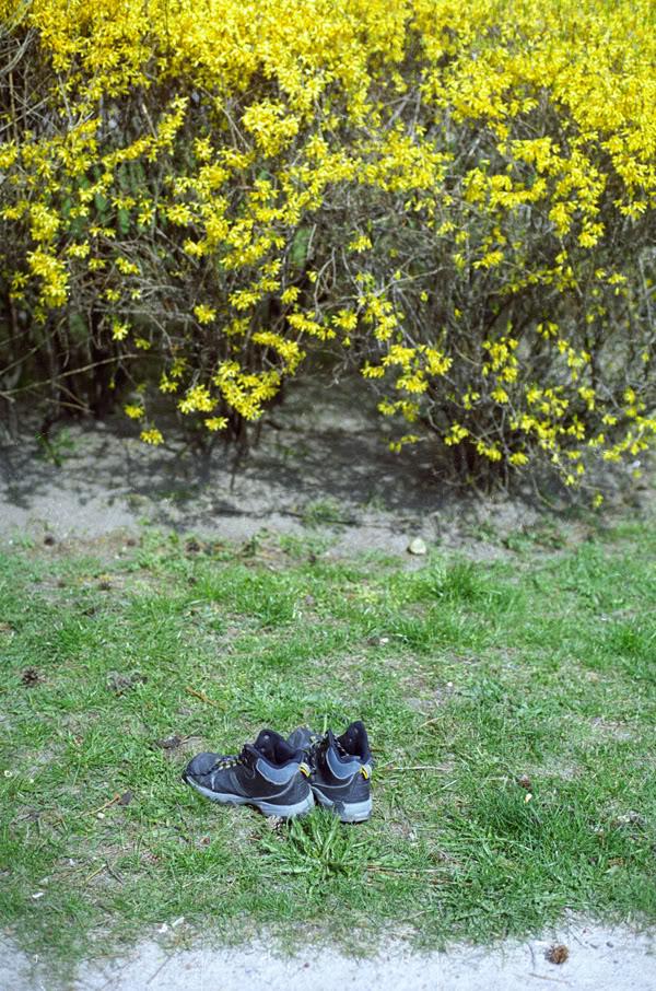 krzak; bush; buty; shoes; trawa; grass