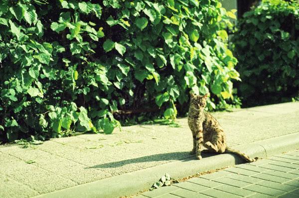 Kot; Cat