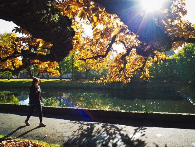 Park; Gdańsk; Oliwa; Jesień; Autumn;