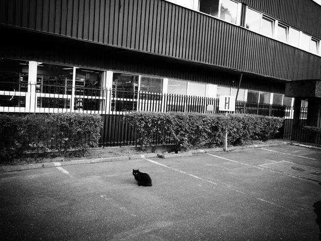 Czarny kot; black cat; ulica; street