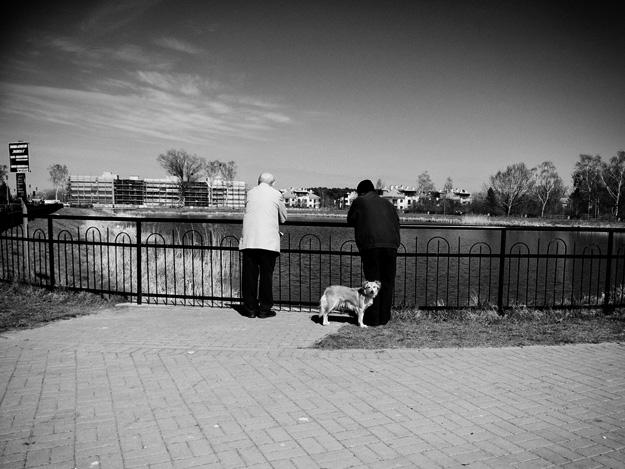 pies; dog; rozmowa; talk.; staw; pond