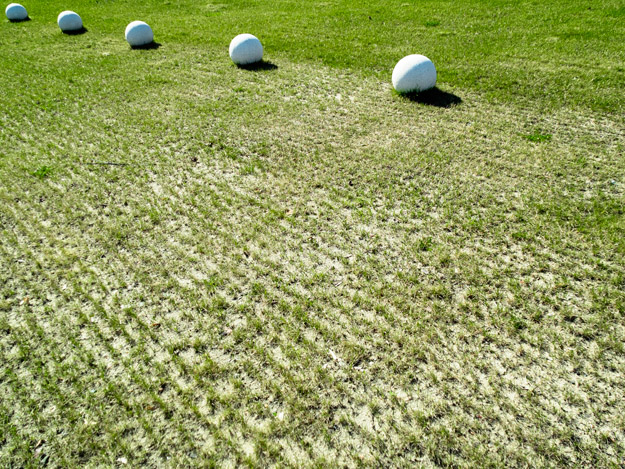 trawa; grass; kule; balls