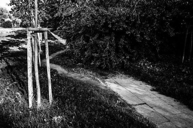 ścieżka; krzaki; path; bushes