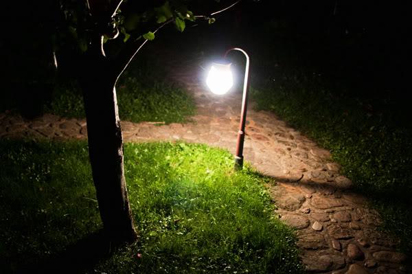 światło; light; trawa; grass; drzewo; tree