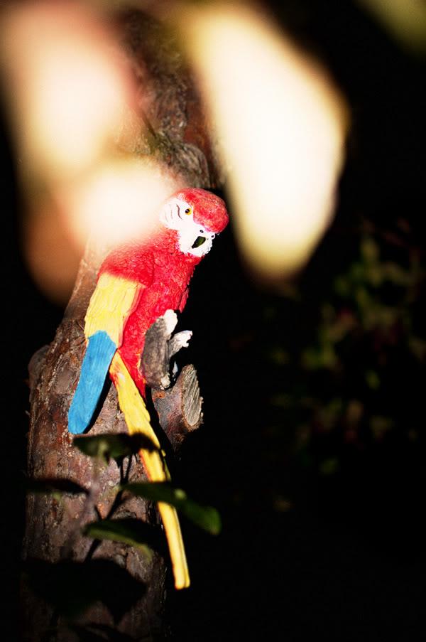Papuga; Parrot