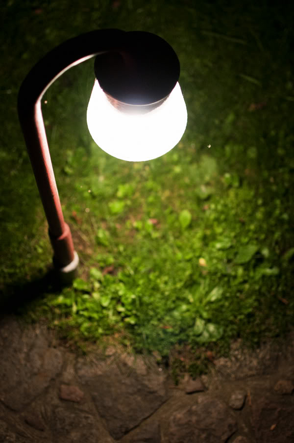 Światło; light; trawa; grass