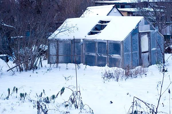 glasshouse, winter, szklarnia, zima