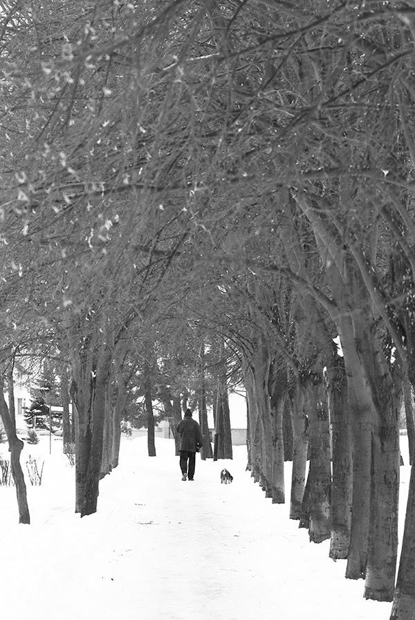 Drzewa, alejka, człowiek, pies, spacer, trees, alley, man, dog, walk