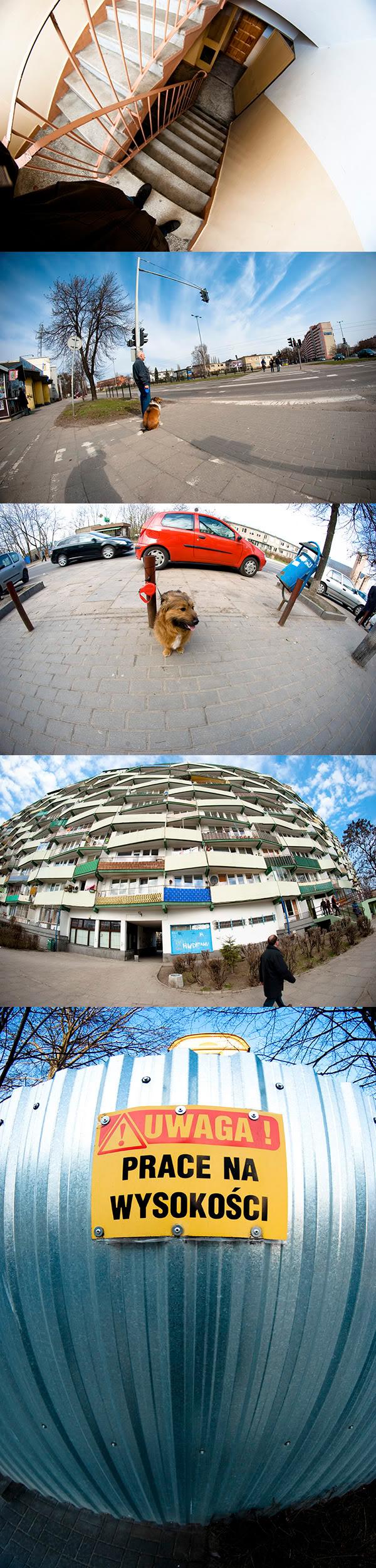 fisheye, rybie oko, ulica, street, pies, dog, plot, fence